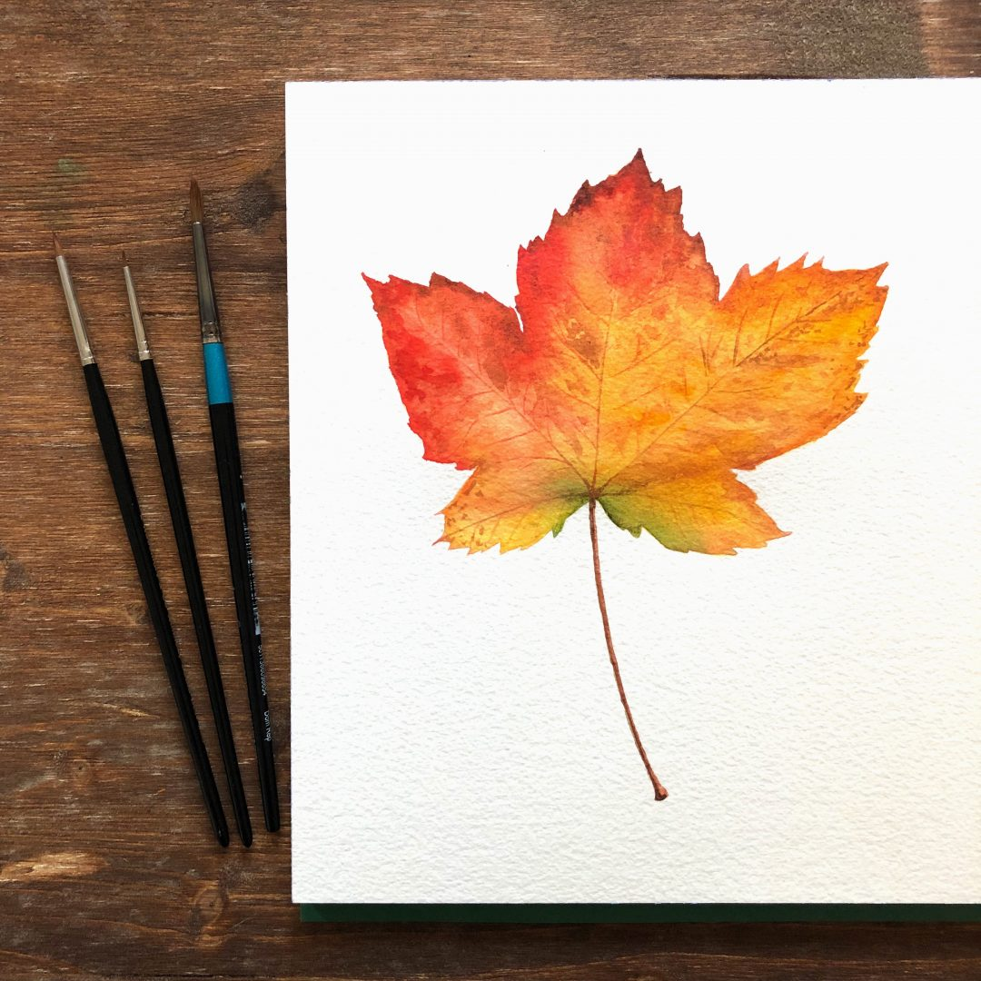 Painting of autumnal sycamore leaf in watercolour