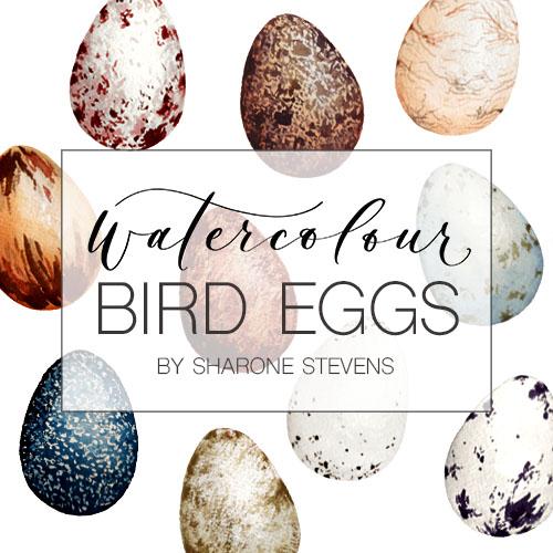 Watercolour Bird Eggs Class Cover Image