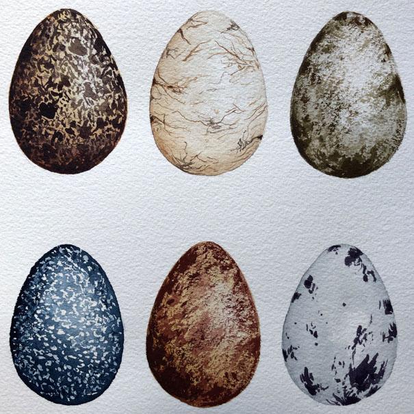 Watercolour Bird Eggs