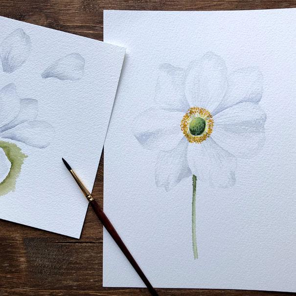 White Watercolour Anemone