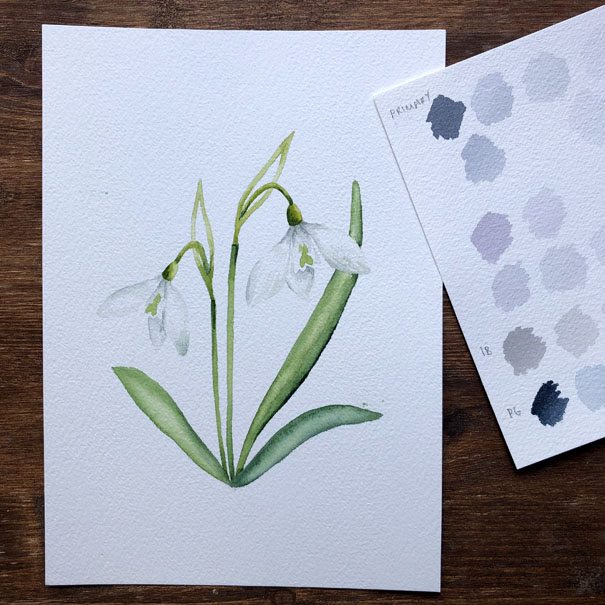 Watercolour Snowdrops